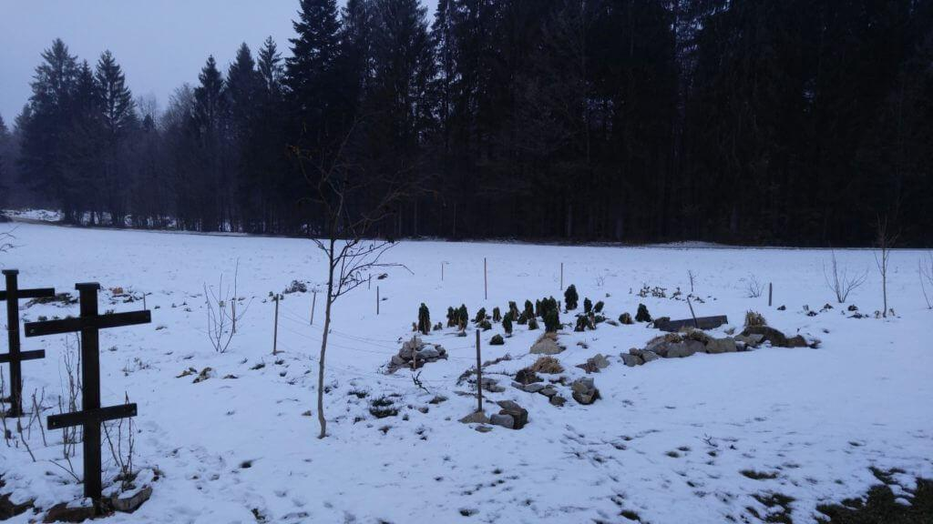 Vrt v snežnem objemu. Brstični ohrovt je v mrazu razvil še boljši okus