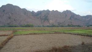 Suha polja riža in nekaj namočenih polj, kjer raste riž v sušnem obdobju