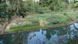 Bujni vrt v džungi na drugi strani jame Konglor