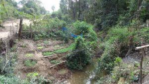 Bujni vrt v džungi 2 na drugi strani jame Konglor