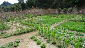 Lepo vidne sadilne jamice s kompostom in celotno zelenje na vrtu