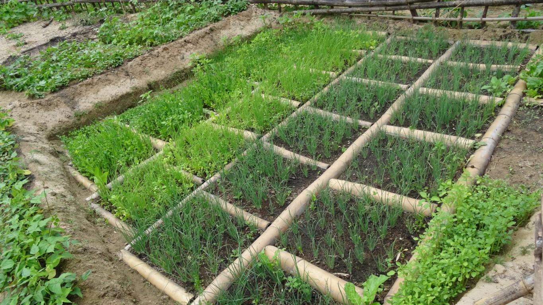 Malda čebula, veliko zelenja in robovi iz bambusovega debla