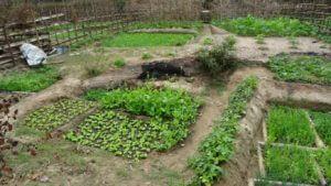 Na sredini vrt je napravljeno deblo, spredaj malda solata in ostalo zelenje