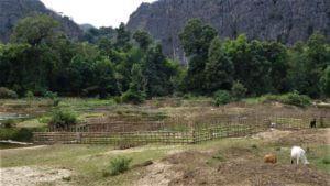 Vrtovi ob reki Hinboun