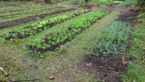 Vrt, ki ga je namočil dež, slikan nekaj trenutkov po obisku nasada kave