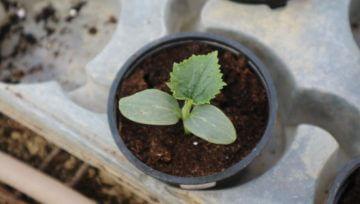 Zakaj je pomembna vzgoja lastnih sadik