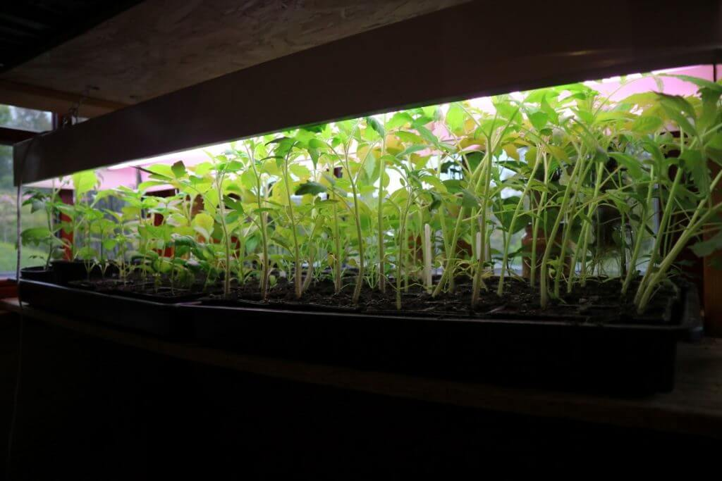 Vzgoja sadik v Hiškotu pod posebno lučjo