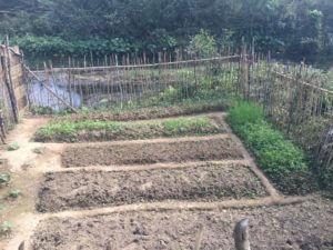 Pripravljene gredice vrta pri Vang Viengu