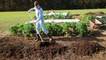 Strošek komposta in koliko ga potrebujem za svoj vrt
