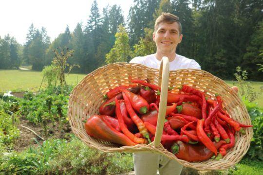 Zrela sladka rdeča paprika