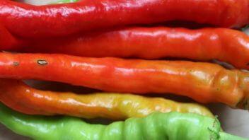 Sladki feferoni vzgoja gojenje