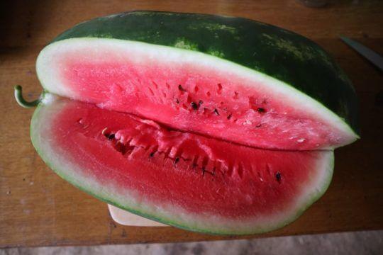 zrela lubenica