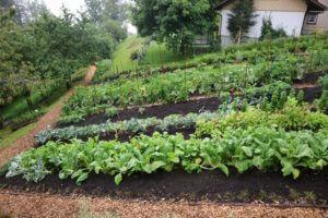 Zgoraj zeliščni vrt, spodaj zelenjavni vrt, ki oskrbuje družino
