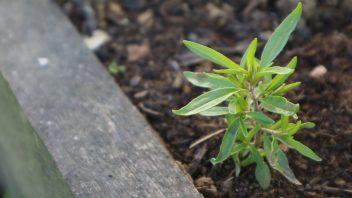 Šetraj vzgoja in nega vrt obilja