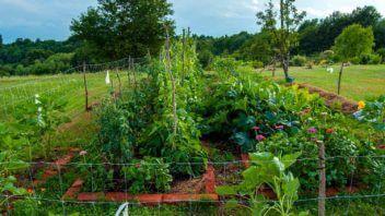 Vaši vrtovi #1 - Tadej Gudan, Mačkovci, Prekmurje