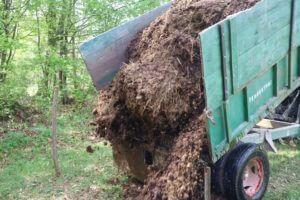 Svež konjski gnoj bo postal prvovrsten kompost