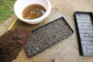 Semena prekrijemo s substratom