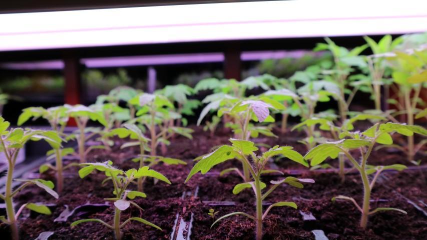 prostor za vzgojo lastnih sadik
