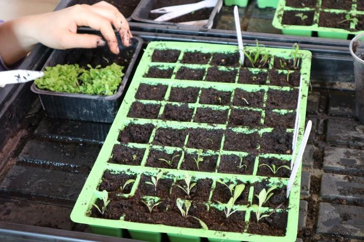 kako izbrati sadilni plato lonček