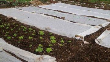 Spomladanska uporaba vrtnih kopren