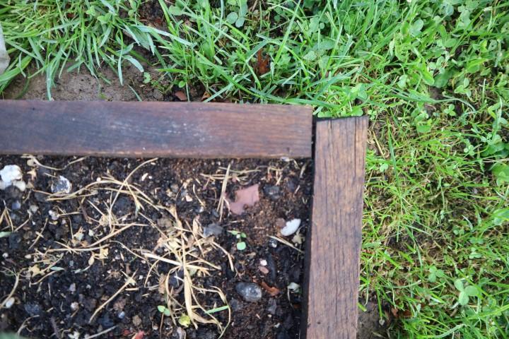 Mravlje obožujejo okvir dvignjene grede.
