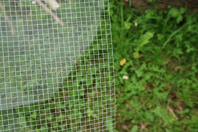 Kovinska mreža uporabljena na dnu dvignjenih gred.