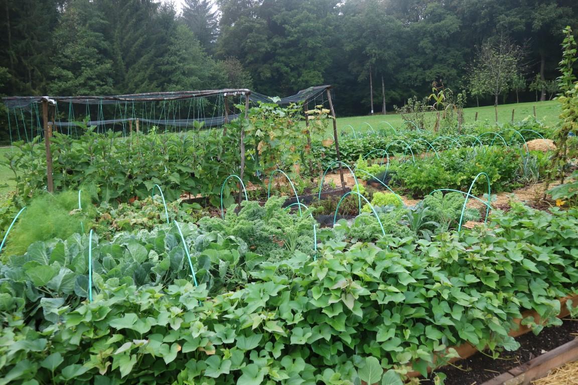 avgust vrt obilja 2018