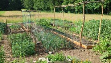(Ne)ekonomičnost vrtnarjenja