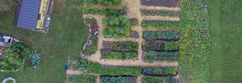 Vrtnarjenje brez prekopavanja tal.
