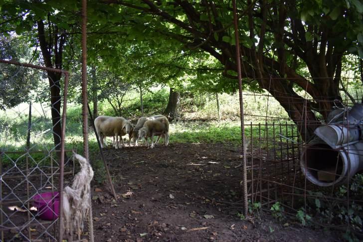 Zemlja pri ovcah.