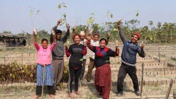 Projekt Pet dreves