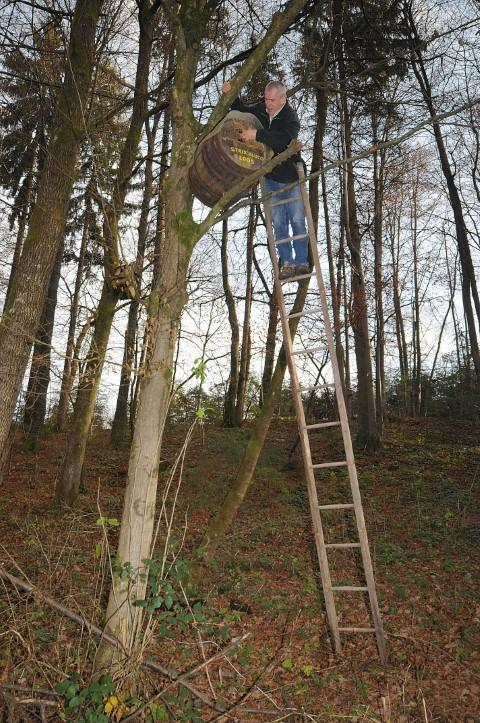 Čiščenje gnezdilnice lesne sove.