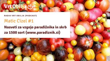 Matic Cizel #1 - Nasveti za vzgojo paradižnika in skrb za 1500 sort (www.paradiznik.si)