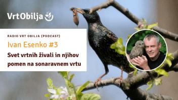 Ivan Esenko #3 - Svet vrtnih živali in njihov pomen na sonaravnem vrtu
