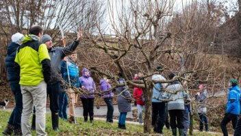 Obrezovanje sadnih dreves - dvodnevni tečaj