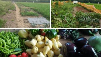 Vaši vrtovi #12- Mihaela Zabukovec, Velike Lašče