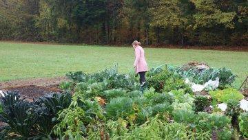 Navidezna samooskrba in izziv popoldanskega vrtnarjenja