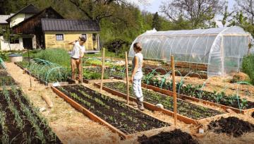 Opora za rast graha, boba, paprike, špargljev