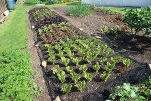 Solatna mešanica prinaša največ zaslužka od vse zelenjave.