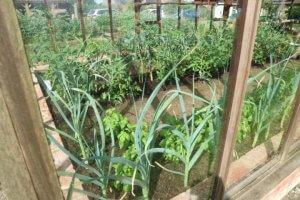 Zasaditev v steklenjaku