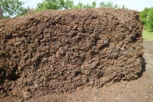 Kompost iz konjskega gnoja.