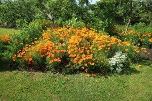 Cvetlične grede