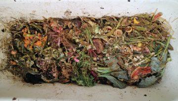 Vermikompostiranje različnih organskih odpadkov v stari banji