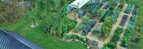 Sonaravno vrtnarjenje brez prekopavanja tal