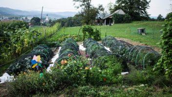 Vaši vrtovi #17 - Kristina Urbanč, Šmarješke Toplice (VIDEO)