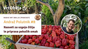 Andraž Polutnik #8 - Nasveti za vzgojo čilija in priprava pekočih omak