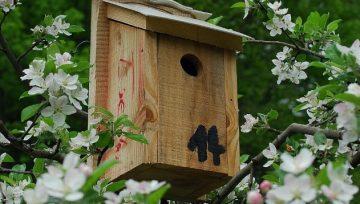 Gnezdilnice za ptice