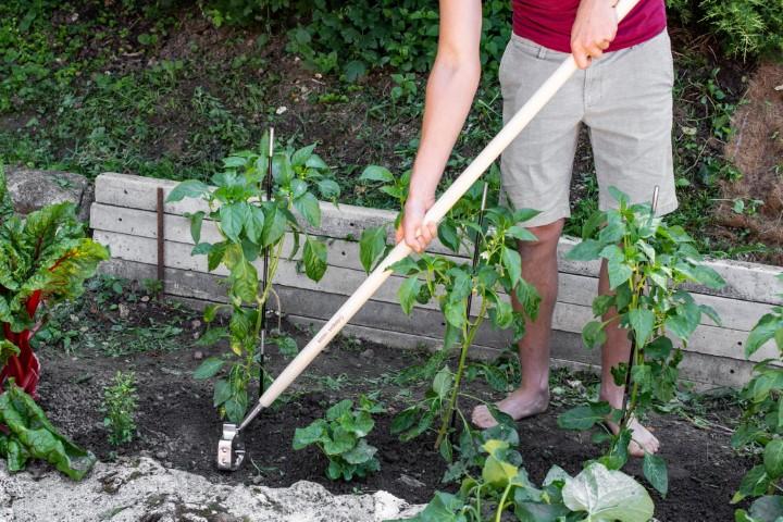 Nihajna motika uporaba na vrtu - Vrt Obilja