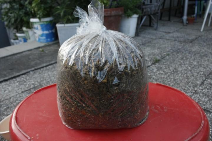 Vreča napolnjena z inokuliranim substratom v kateri gojimo bukove ostrigarje.
