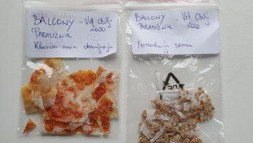 Shranjevanje semen paradižnika - sušenje ali fermentacija?
